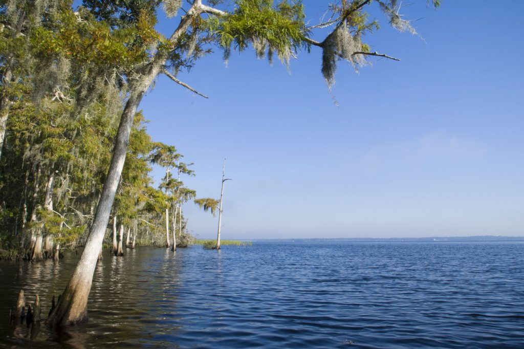 Cypress trees along the St. Johns River