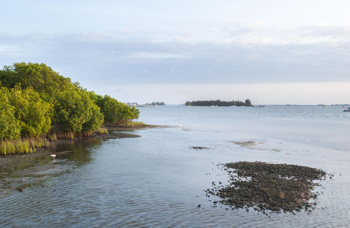 Indian River Lagoon shoreline