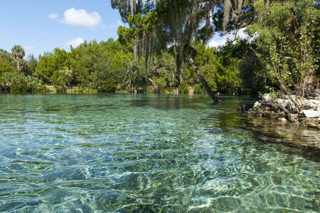 Silver Glen Springs with clear water with sand bottom surrounded by trees