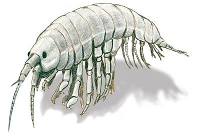 Drawing of a scrud