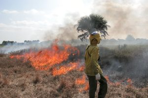 A person looking over a prescribed fire in a field