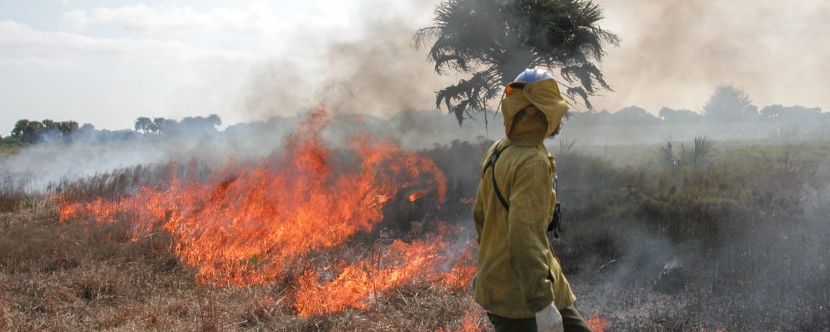 Land manager keeping an eye on a prescribed fire