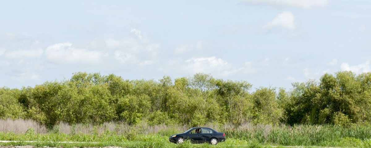 A car driving on the Lake Apopka Wildlife Drive