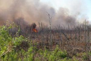 A prescribed fire burnign through a wooded marsh