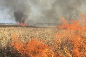 A prescribed fire burning in the Orange Creek Restoration Area