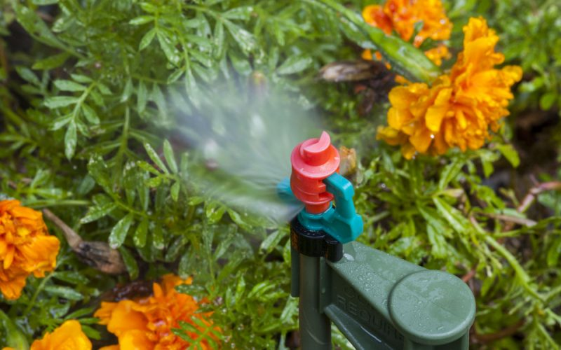 Irrigation spray head watering flowers