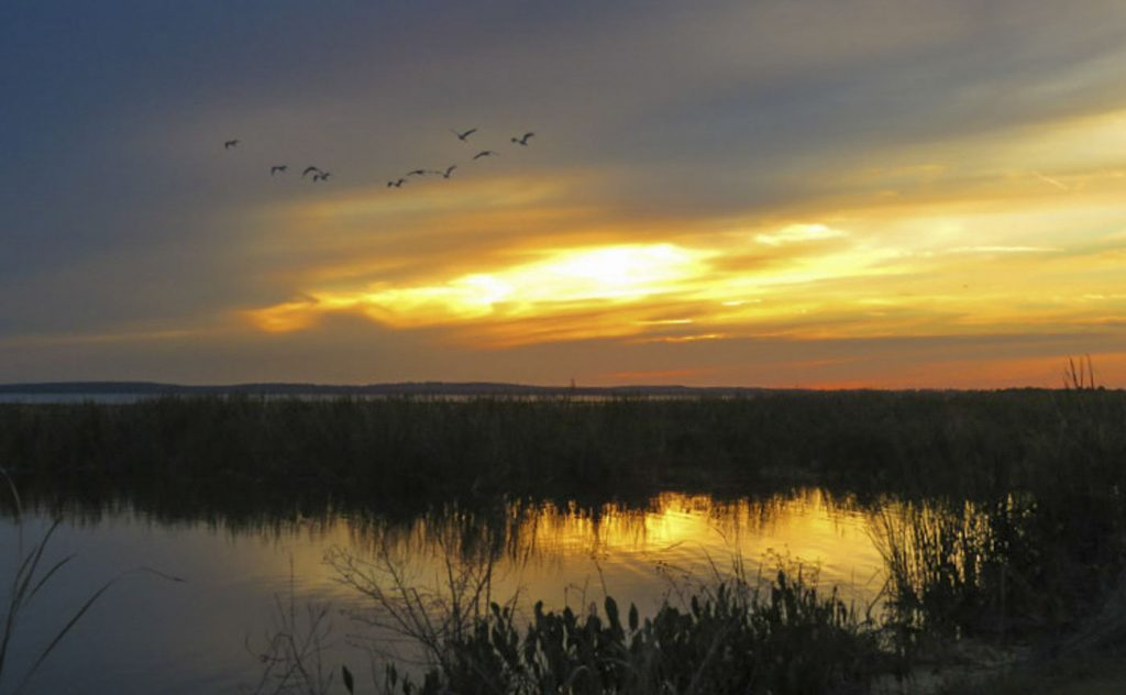 Birds flying over Lake Apopka at sunset