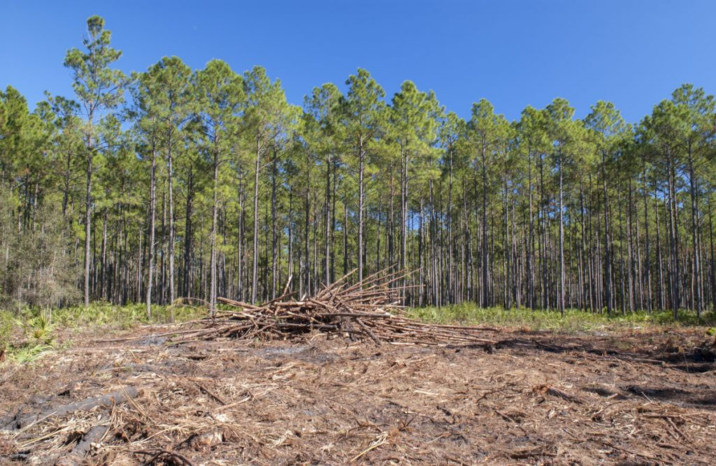 Clear cutting due to Pine Beetle damage