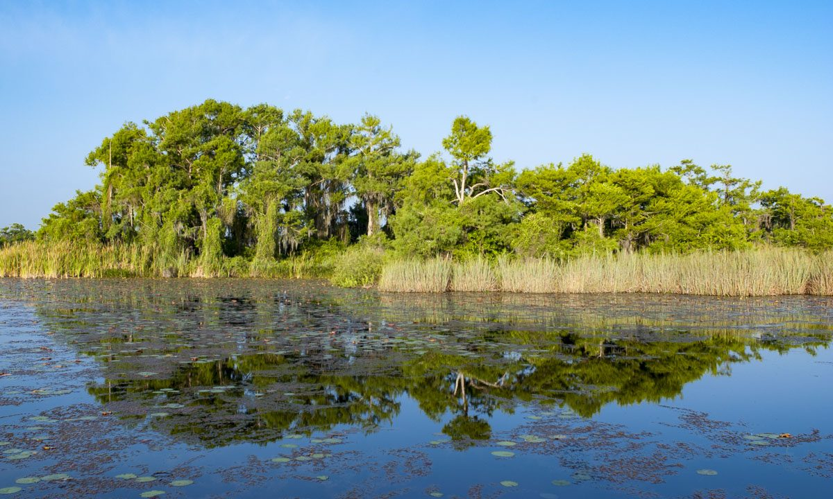 Blue Cypress Conservation Area