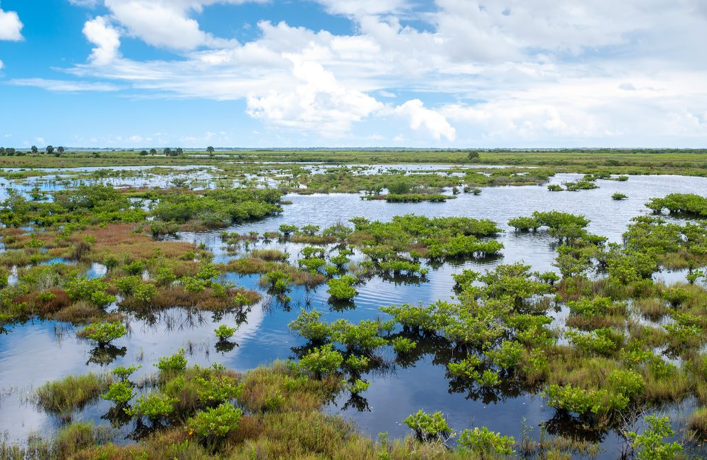 Salt marsh in the Indian River Lagoon