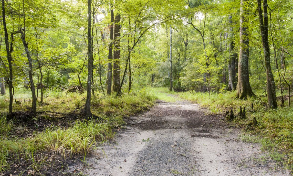 Trail through hardwood forest at Newnans Conservation Area