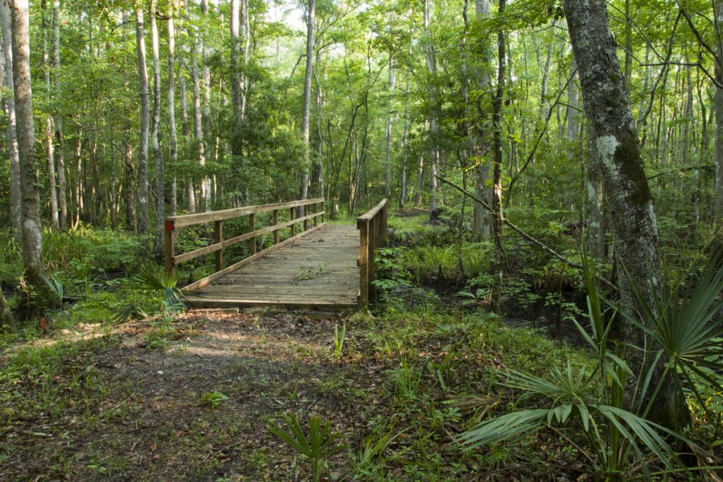 Foot bridge at Julington-Durbin Preserve