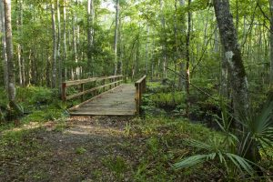 Hiking trail with bridge at Julington-Durbin Preserve