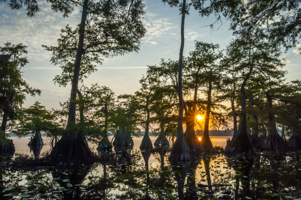 Cypress trees on Lake Norris