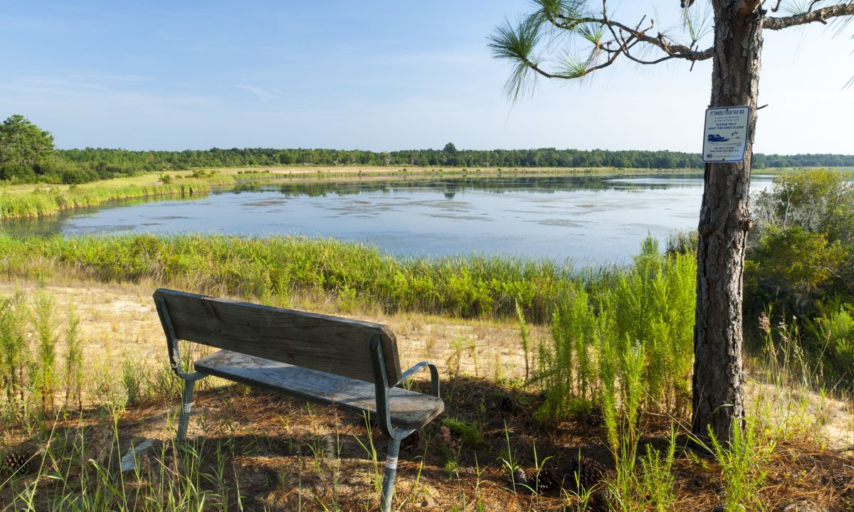 Bench overlooking pond at Lake Norris Conservation Area