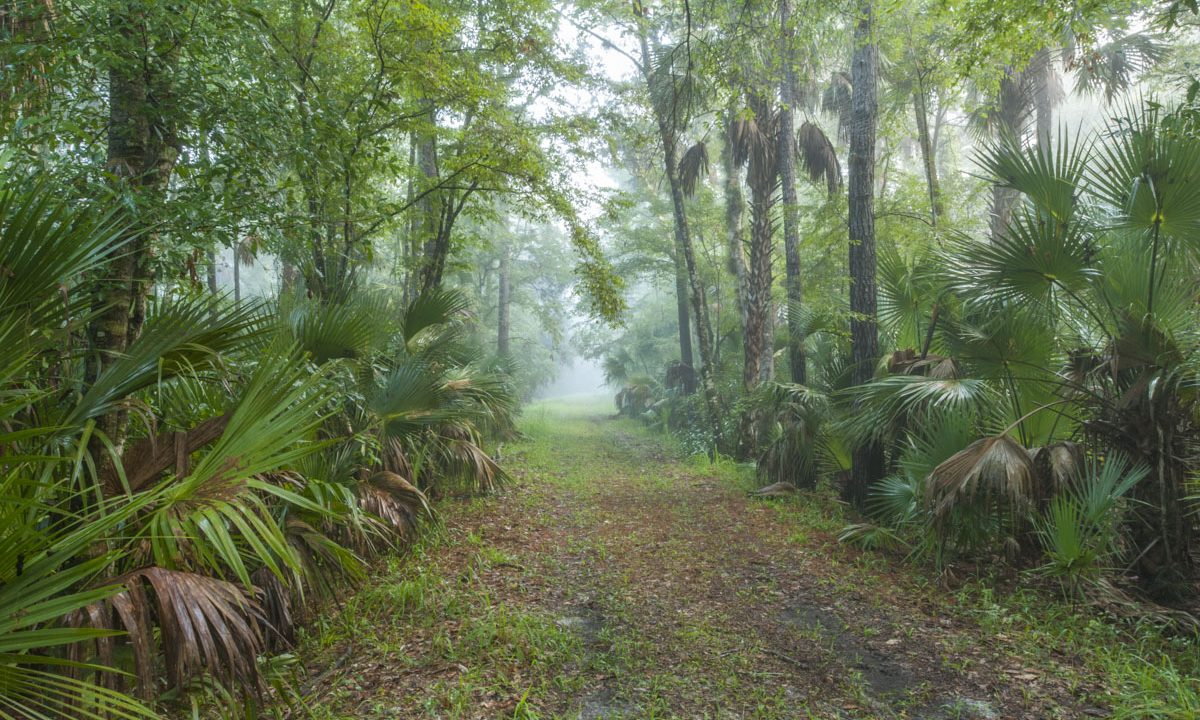 Trail at the Wekiva River Buffer Conservation Area