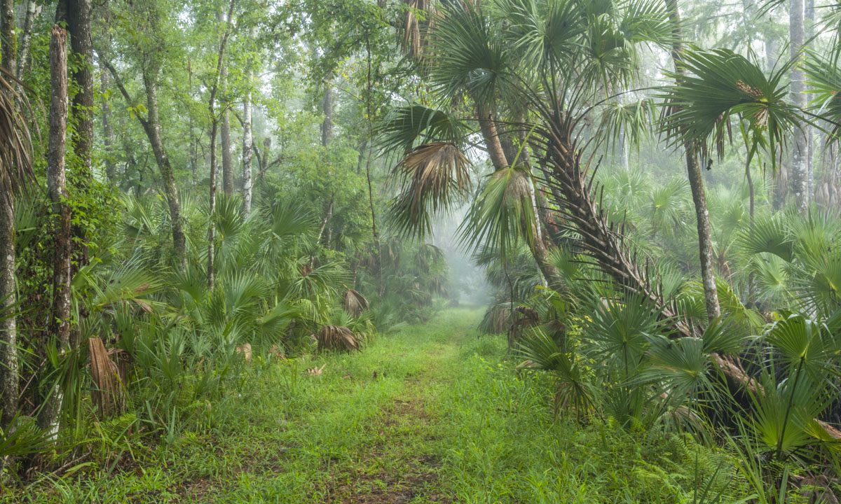 Foggy trail at Wekiva River Buffer Conservation Area