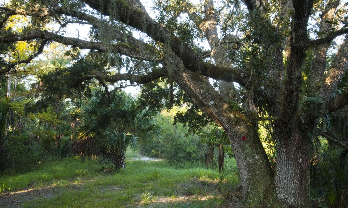 Hiking trail under oak trees