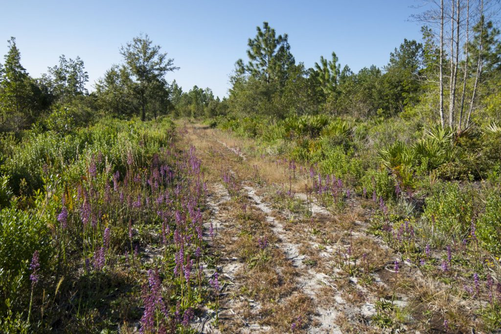 Hiking trail at Deep Creek North Conservation Area
