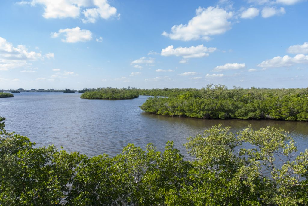 Blind Creek in St. Lucie County