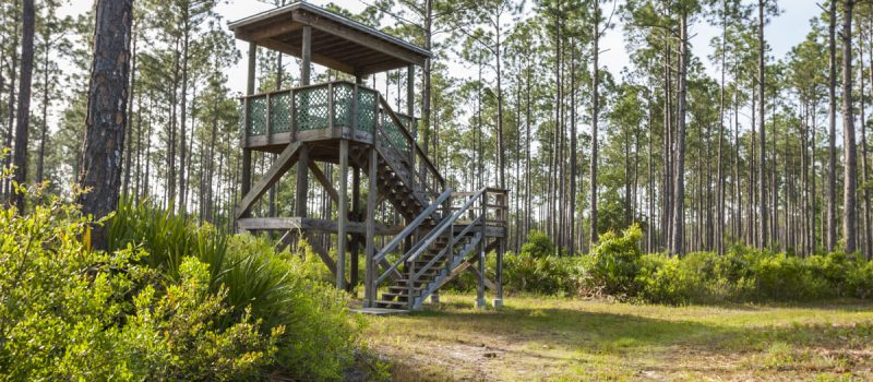 Observation tower at Bayard Conservation Area