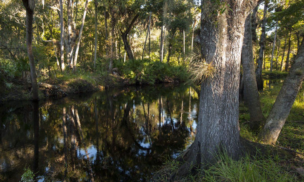 Trails out at Econlockhatchee Sandhills Conservation Area