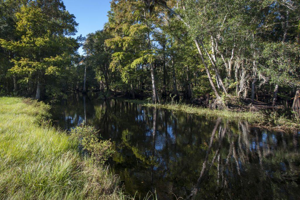 Econlockhatchee River flowing through the Econlockhatchee Sandhills Conservation Area