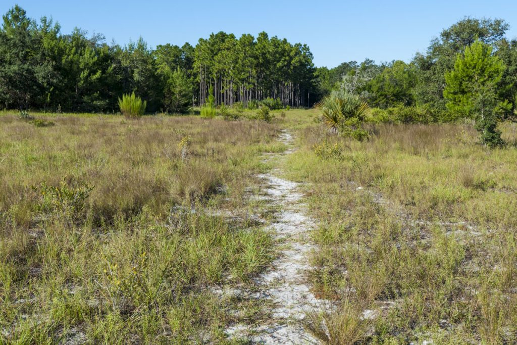 Hiking trail through a field at Econlockhatchee Sandhills Conservation Area