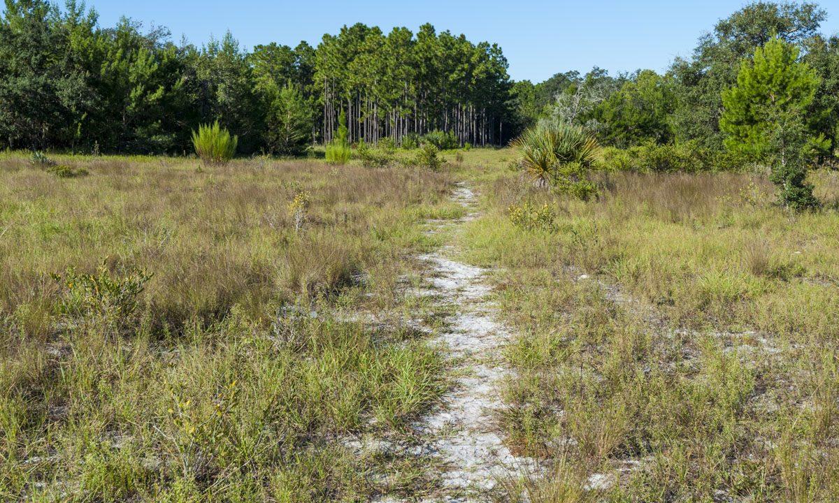Hiking trail through a field at Econlockhatchee Sandhills Conservation Area