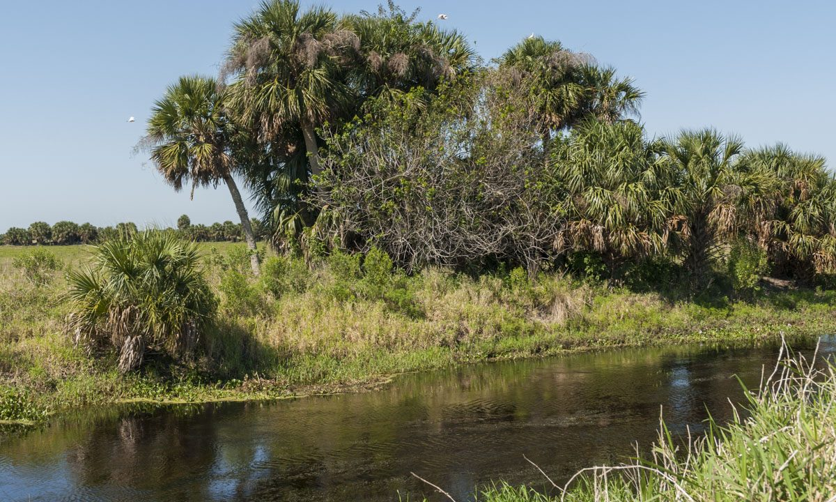 Palm tree lined canal at River Lakes Conservation Area