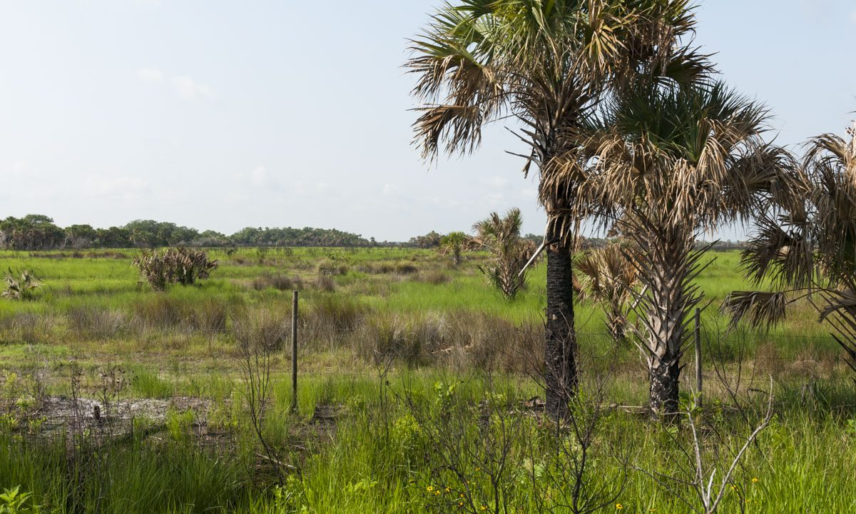 Open field at Canaveral Marshes Conservation Area