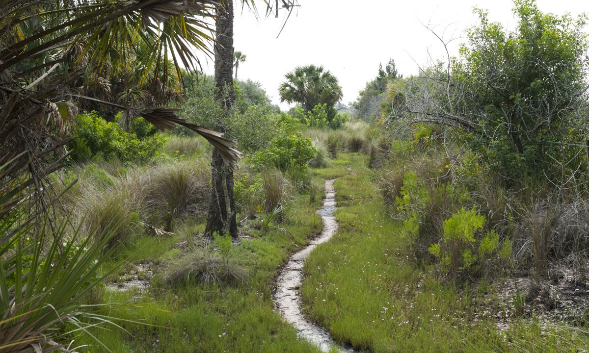Narrow hiking trail at Canaveral Marshes Conservation Area
