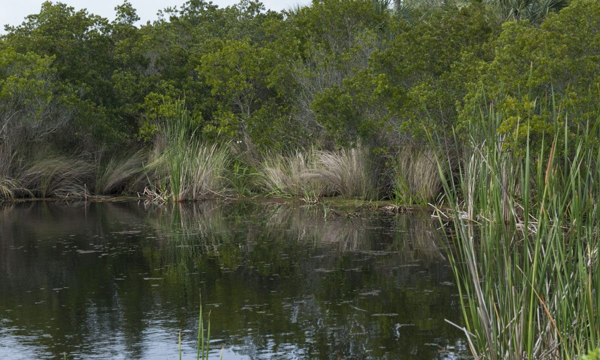 Pond at Canaveral Marshes Conservation Area
