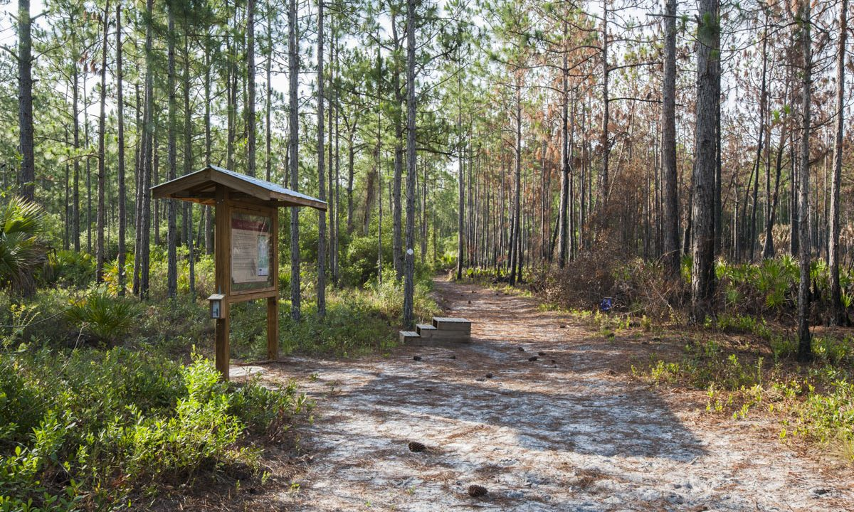 Kiosk and trail at Palm Bluff Conservation Area