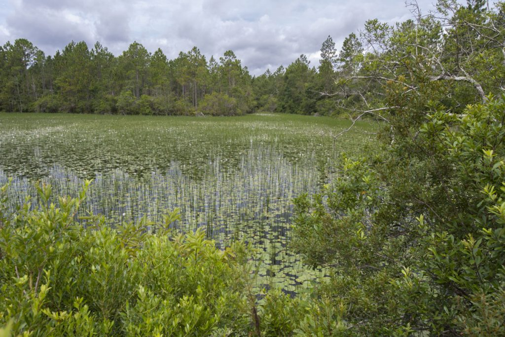 Wetland at Thomas Creek Conservation Area