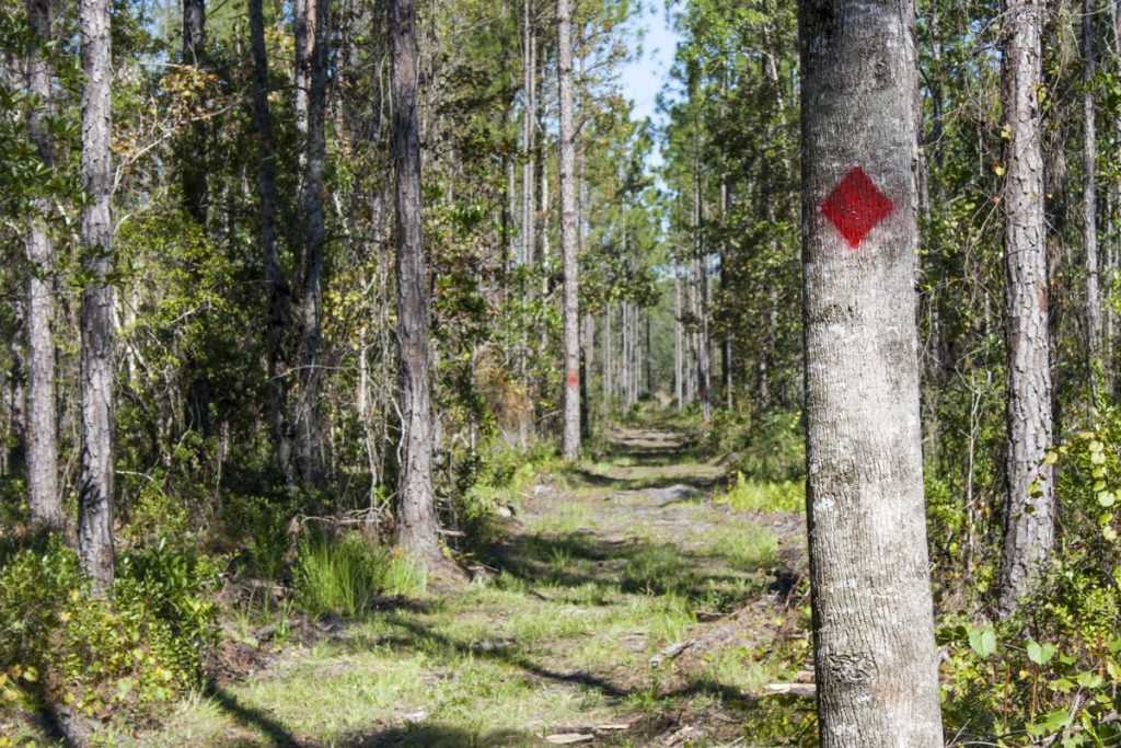 Red blazed trail at Gourd Island Conservation Area