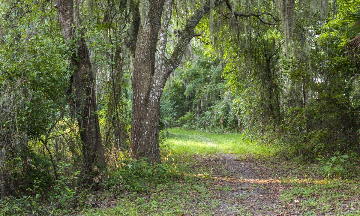 Hiking trail under oak tree canopy