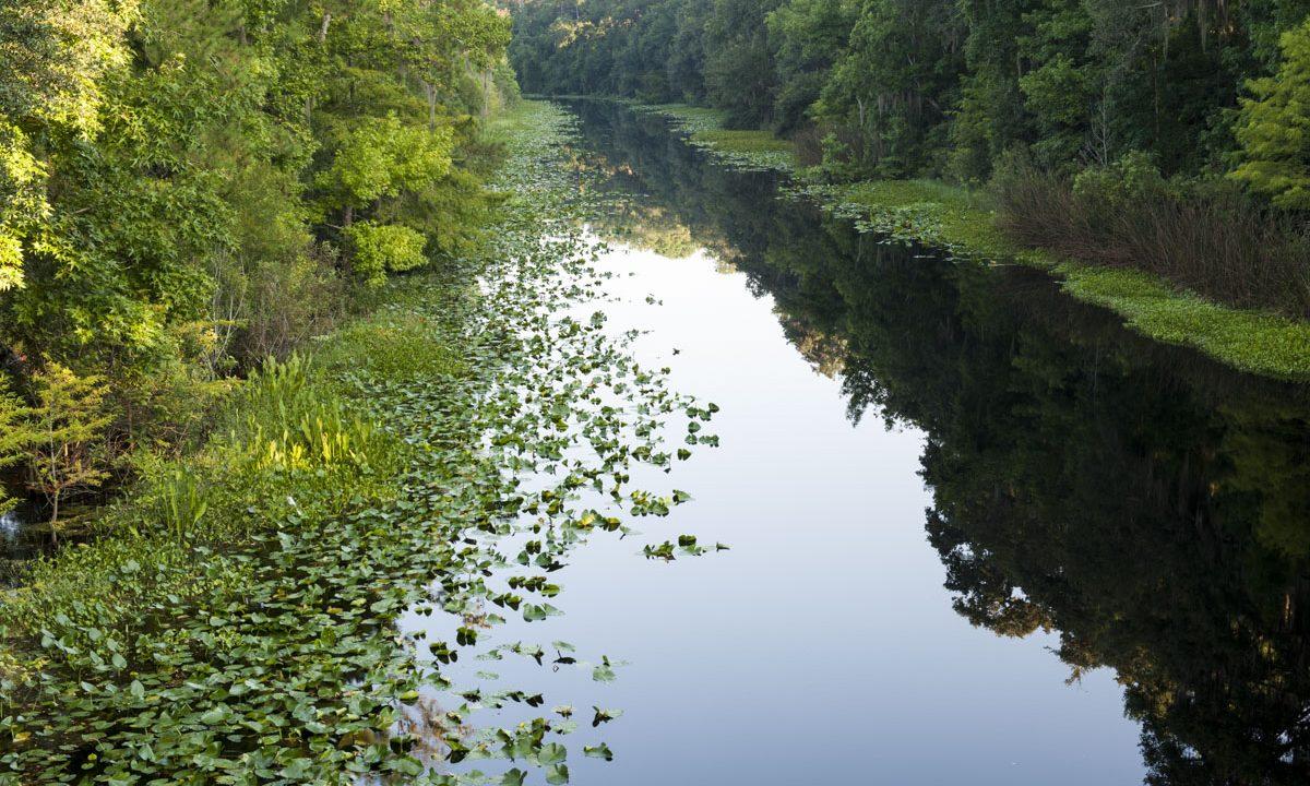 Ockalwaha River