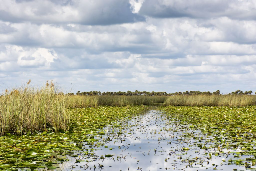 Open marsh with airboat trail at Three Forks Marsh Conservation Area