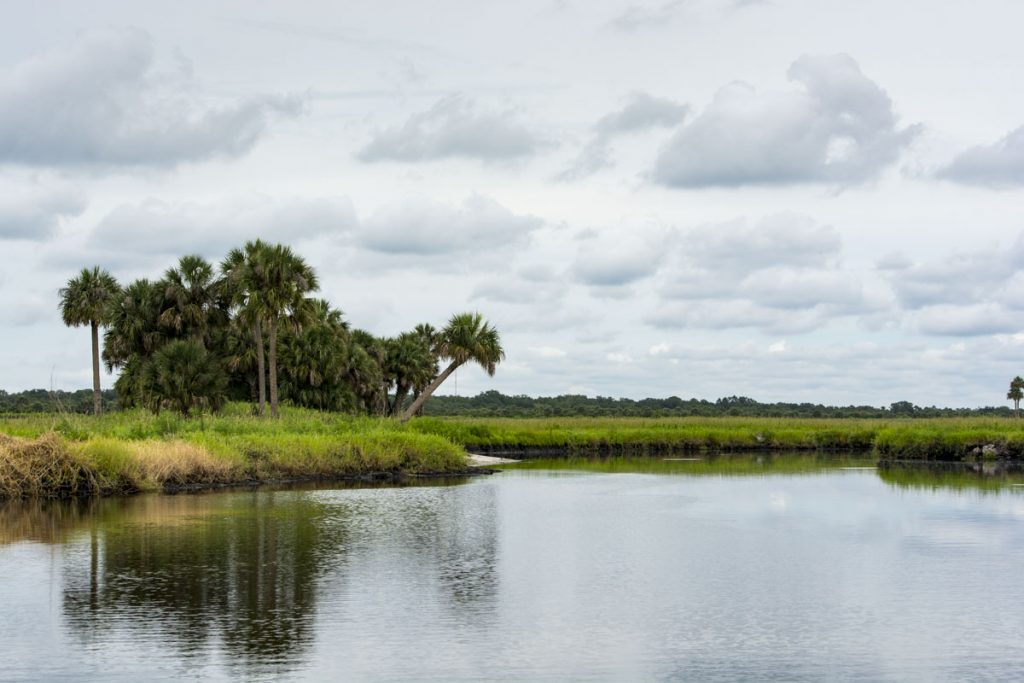 Palm hammock along the St. Johns River at Canaveral Marshes