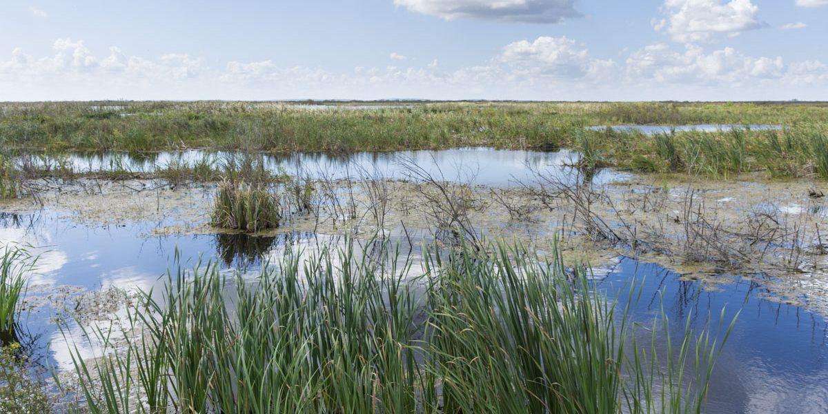 Lake Apopka North Shore wetland cell