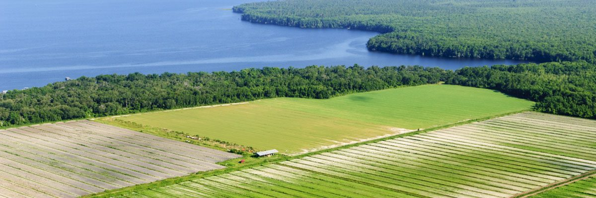 Aerial of a farm on the edge of the St. Johns River