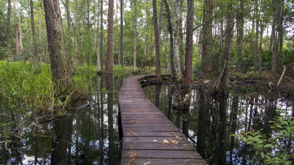 Boardwalk over at wetland
