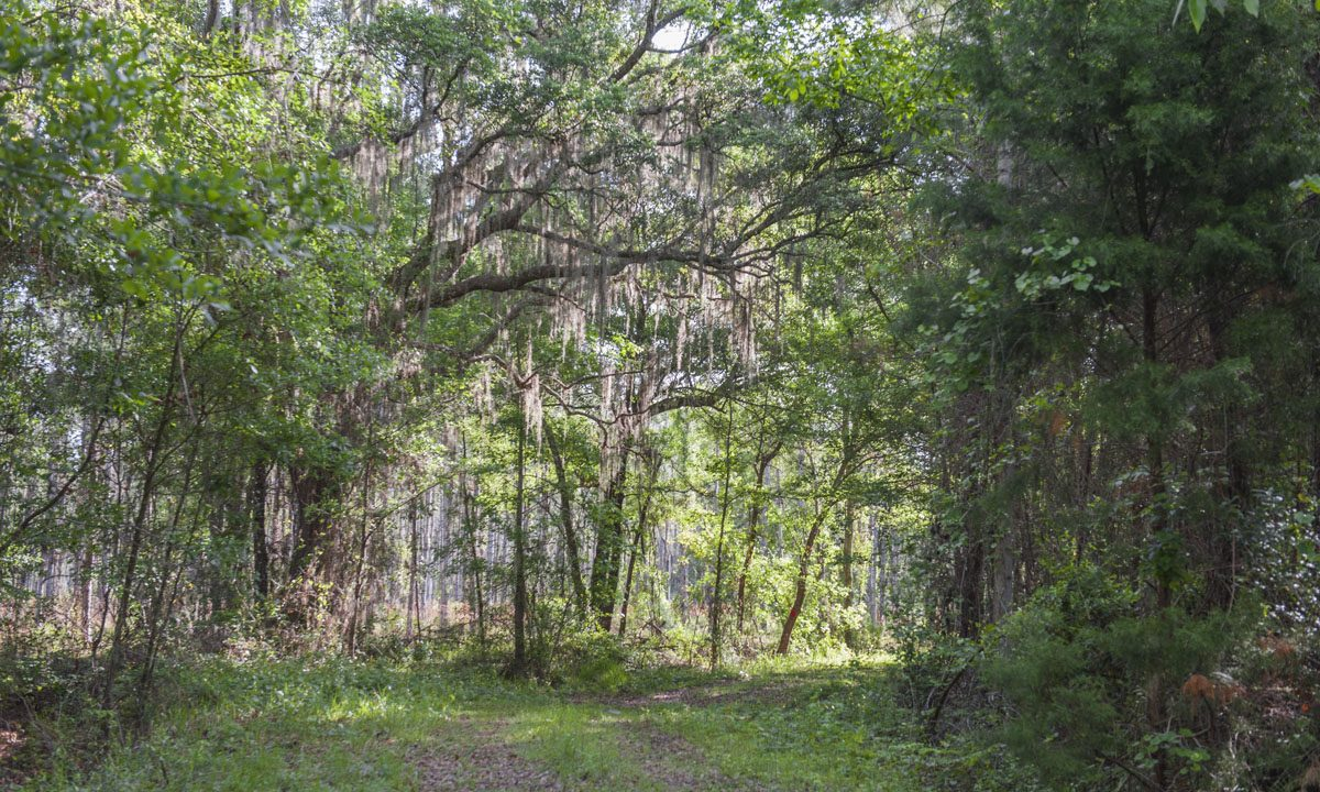 Trail winding through wooded area at Silver Springs Forest