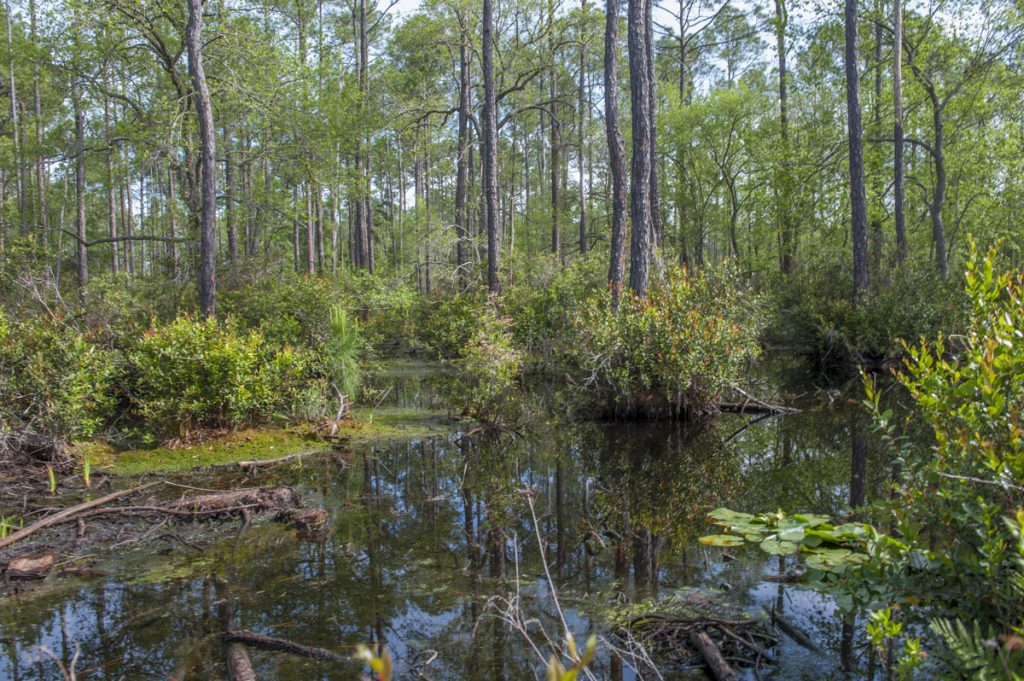 Wetland at Silver Springs Forest