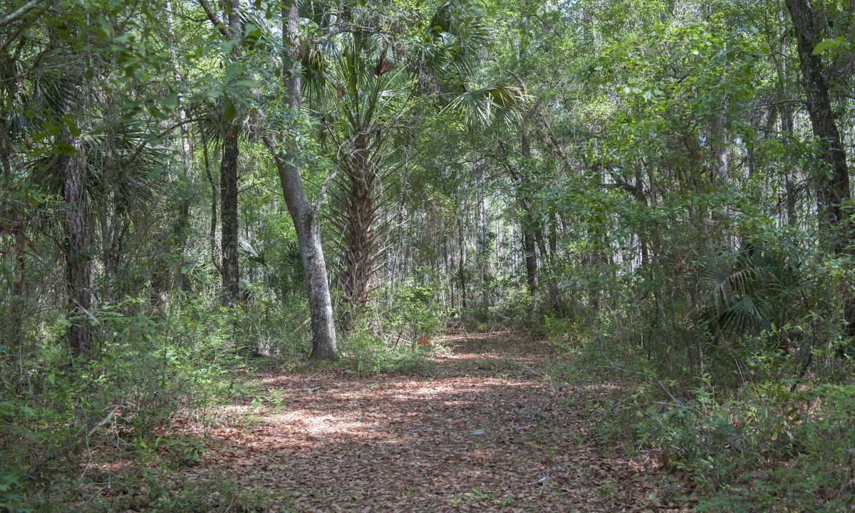 Wooded trail at Silver Springs Forest