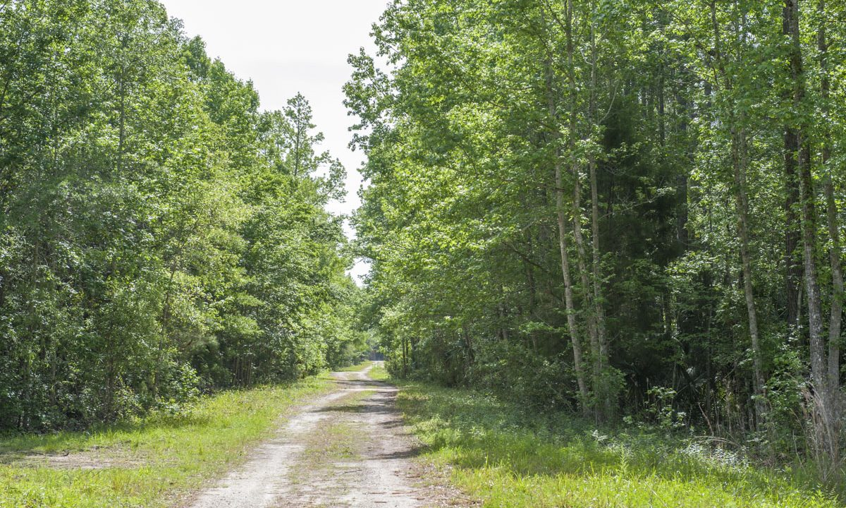 Trail at Silver Springs Forest