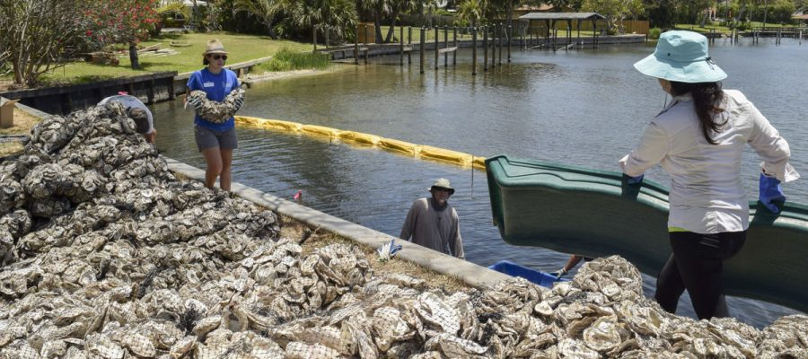 Volunteers putting bags of oyster shells into the Indian River Lagoon