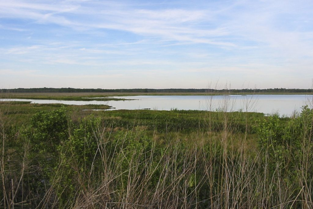 Wetland and pond at Orange Creek Restoration Area