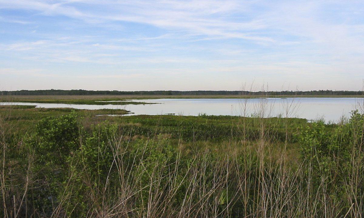 Wetland and pond at Orange Creek Restoration Area